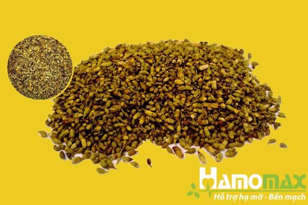 Hòe hoa trong thành phần của Apharin có tác dụng chữa mỡ máu cao và tăng huyết áp rất tốt