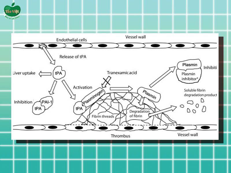 Cơ chế hoạt động của Tranexamic acid