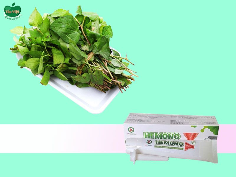Thành phần rau diếp cá có trong Hemono Gel